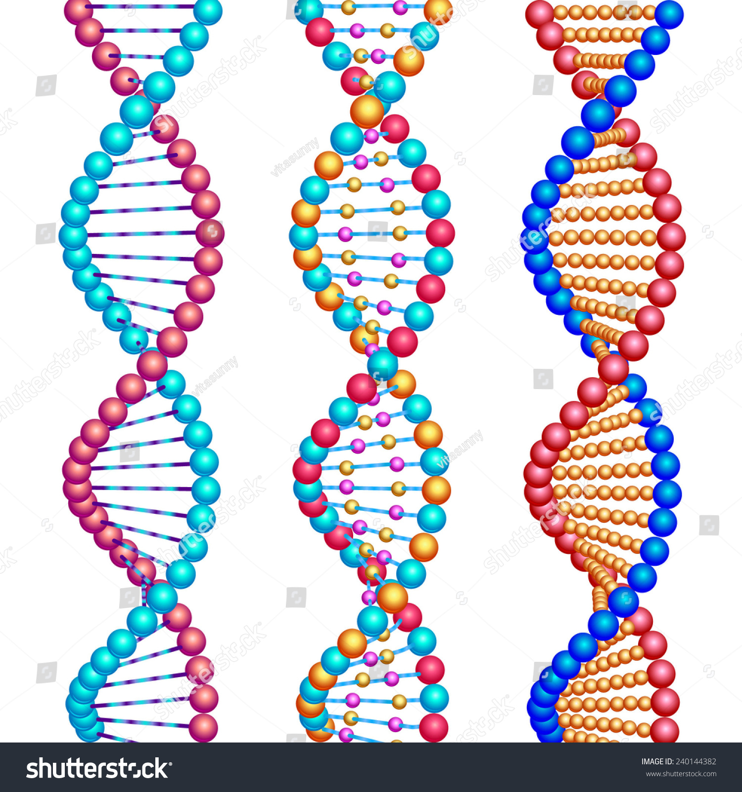 Three Colored Types Dna Molecules Stock Vector 240144382 Shutterstock
