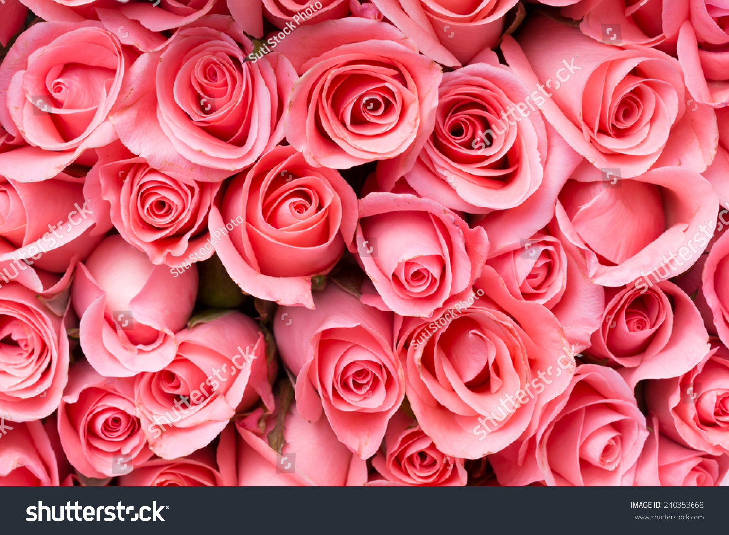 Pink Rose Flower Bouquet Background Stock Photo (Royalty Free ...