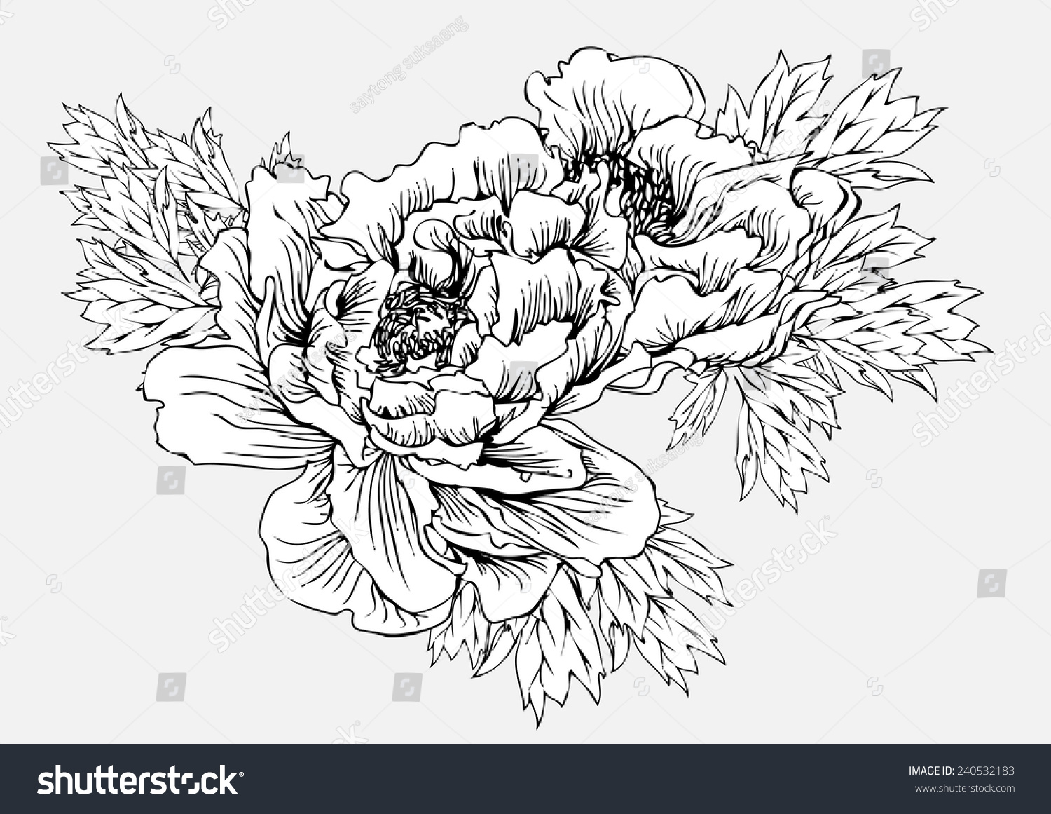 Peony flower isolated on white stock vector 368014568 shutterstock - Flowers Black And White Line Drawing Vector Background Vintage Floral Vector Bouquet Of Peonies And Garden Flowers Botanical Natural Peonies Illustration