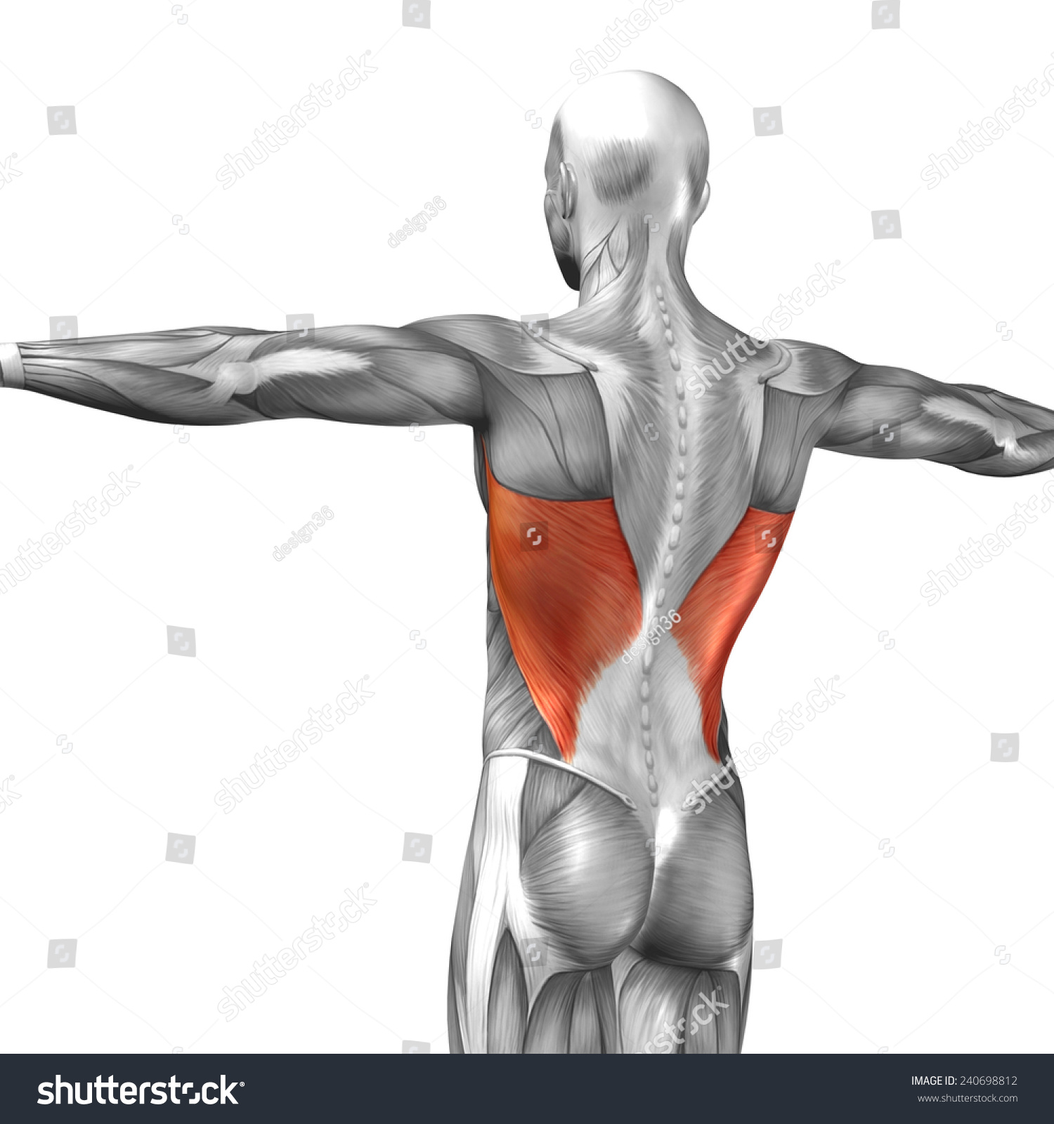 Concept Conceptual 3 D Back Human Anatomy Stock Illustration ...