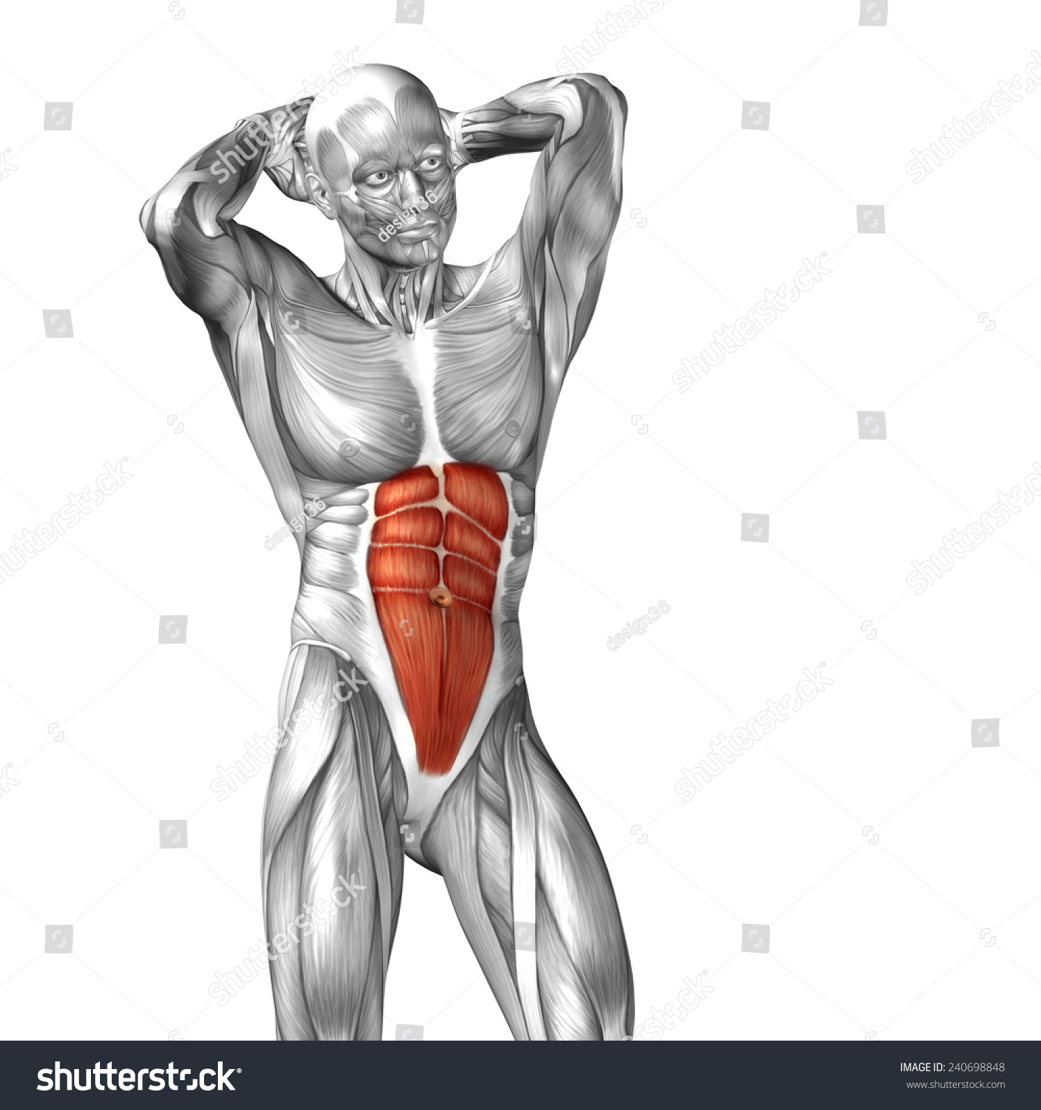 Concept Conceptual 3 D Abdomen Chest Human Stock Illustration ...