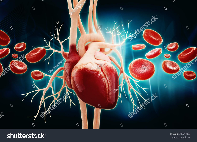 Anatomy Human Heart Blood Cells Stock Illustration Royalty Free