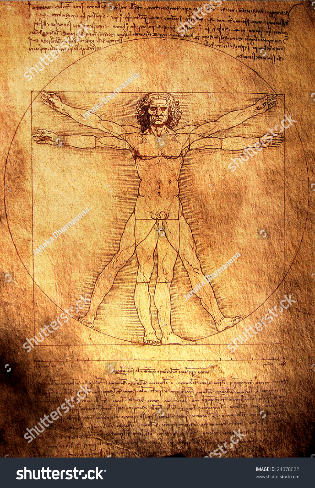 photo of the vitruvian man by leonardo da vinci from 1492 on textured background 24078022. Black Bedroom Furniture Sets. Home Design Ideas