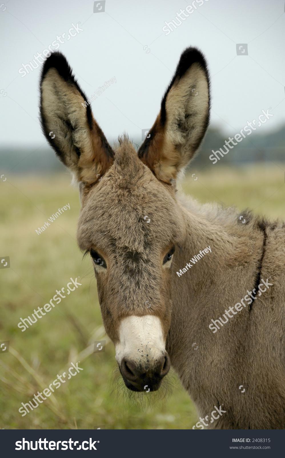 stock-photo-donkey-2408315.jpg