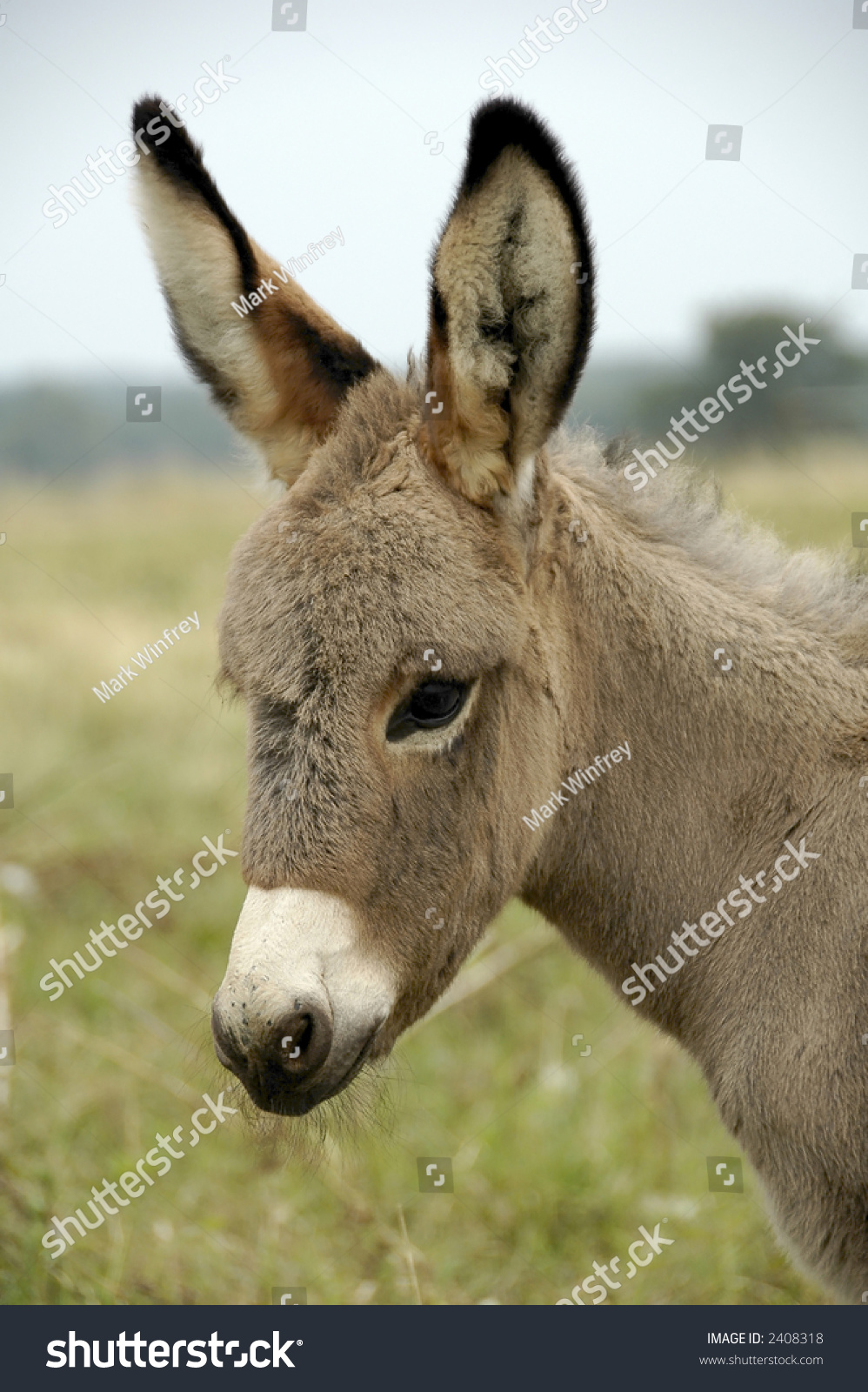 stock-photo-baby-donkey-2408318.jpg
