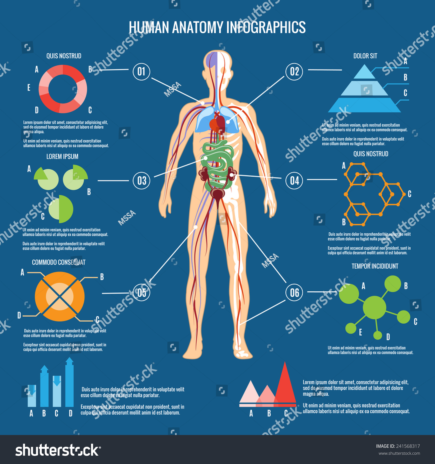 Similar Images Stock Photos Vectors Of Colored Human Body Anatomy