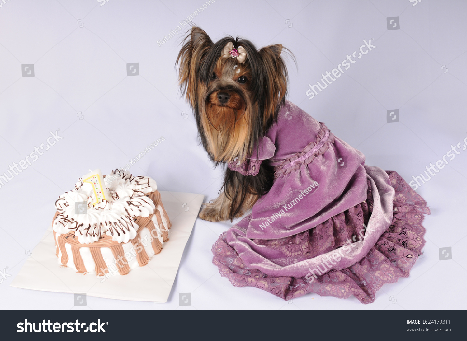 Toy Dog Purple Dress Birthday Cake Stock Photo Edit Now 24179311