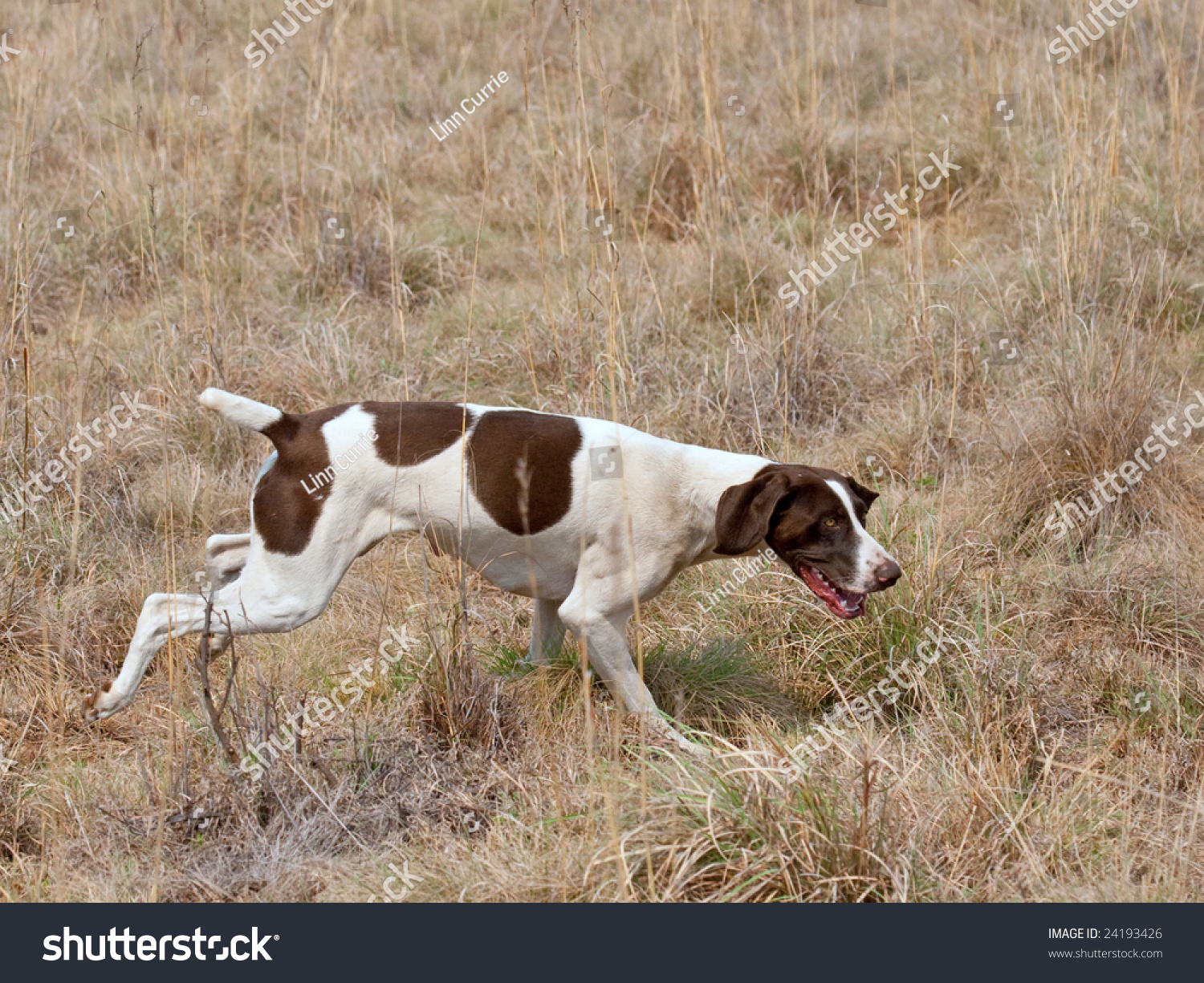 A Dog Can Follow A Scent Trail