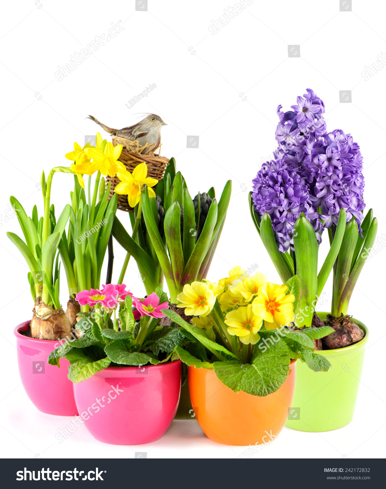 Beautiful Spring Flowers Hyacinth And Narcissus Ez Canvas