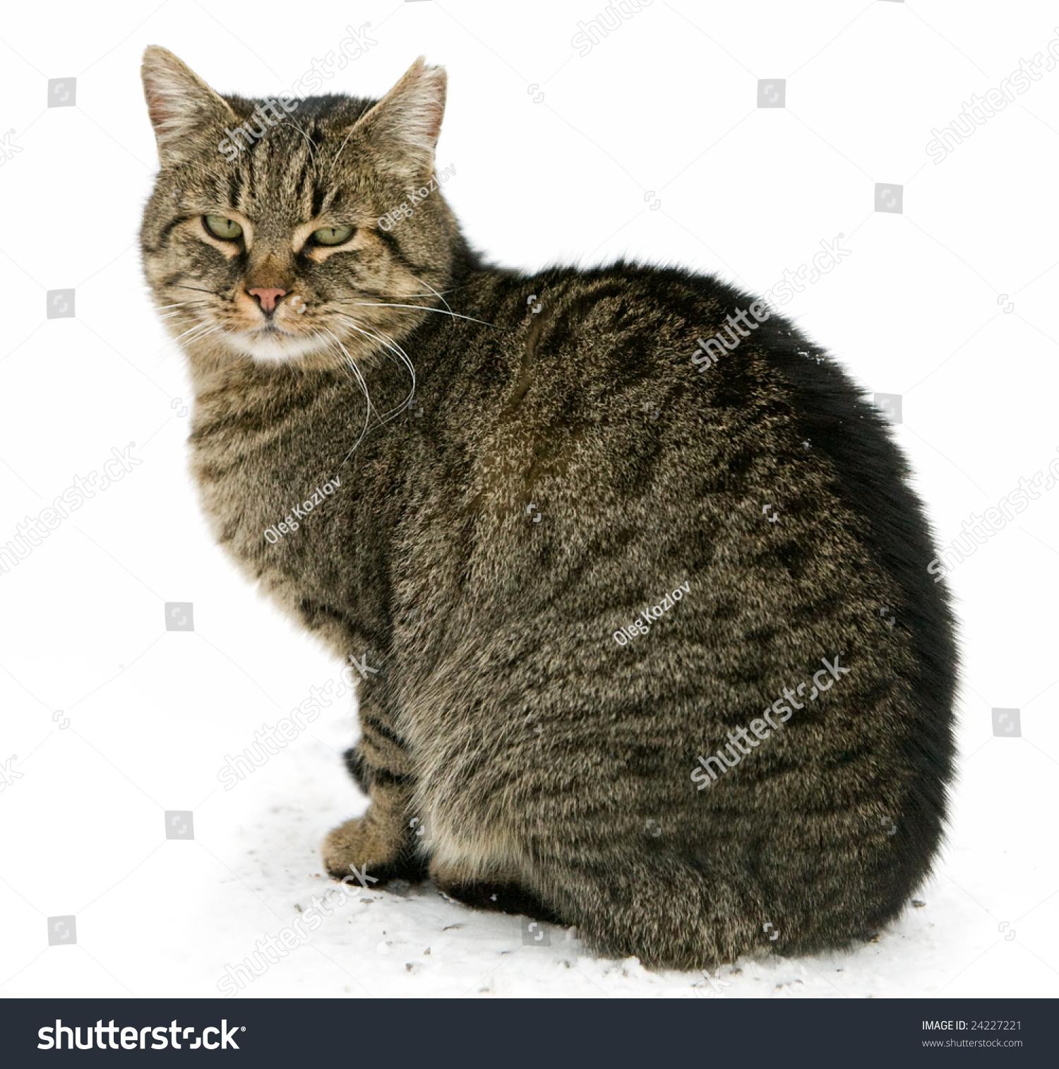 homemade kitten shampoo