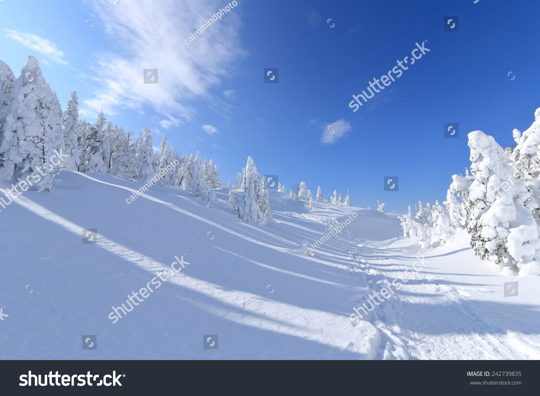 Frozen Trees In The Yatsugatake Mountains Japan Stock