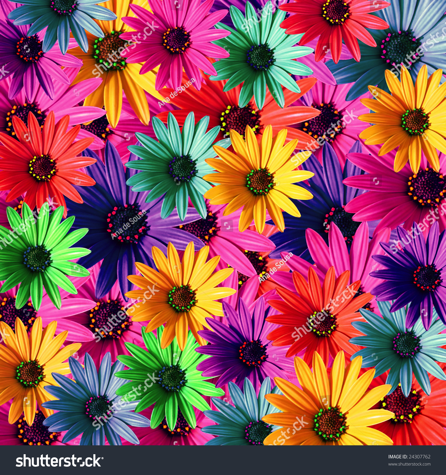 Multi Colored Daisy Flowers Pattern Background Stock Photo ...