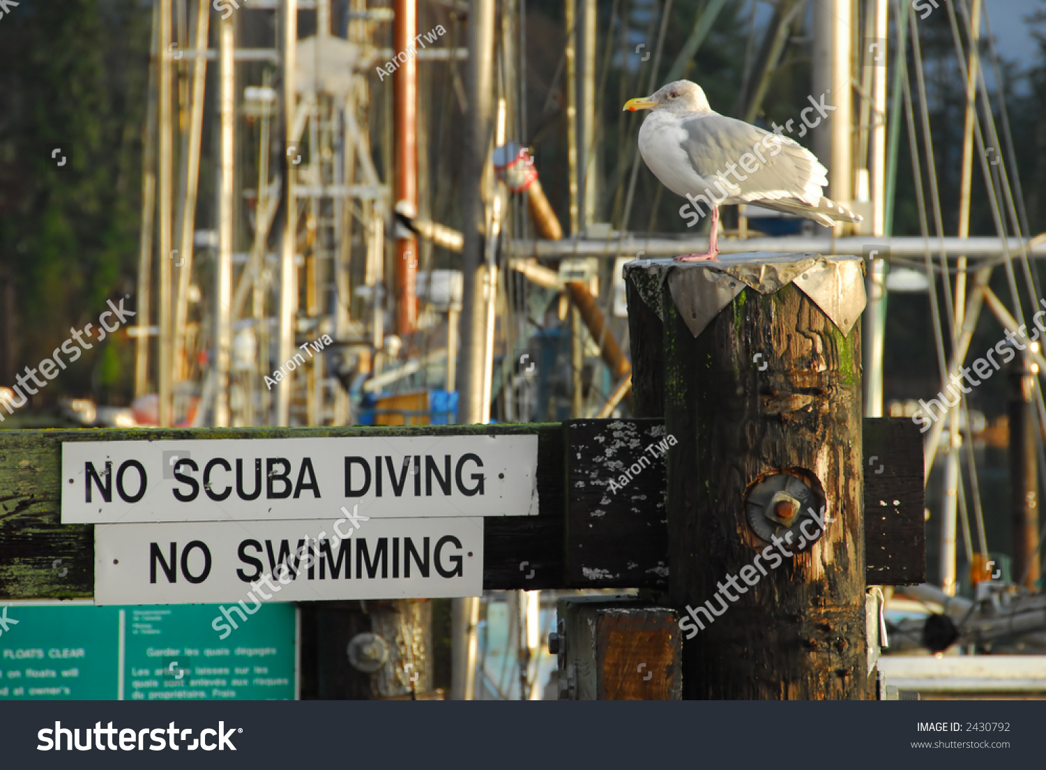 no scuba diving swimming allowed sign stock photo 2430792