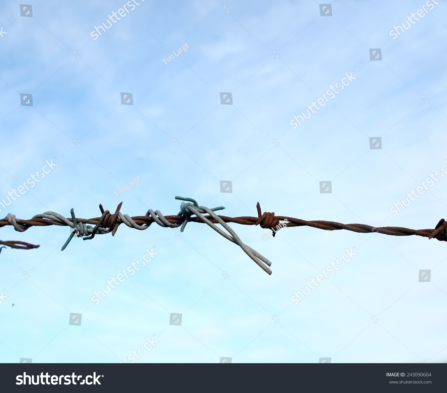 Old New Barbed Wire Fence Twisted Stock Photo (Royalty Free ...