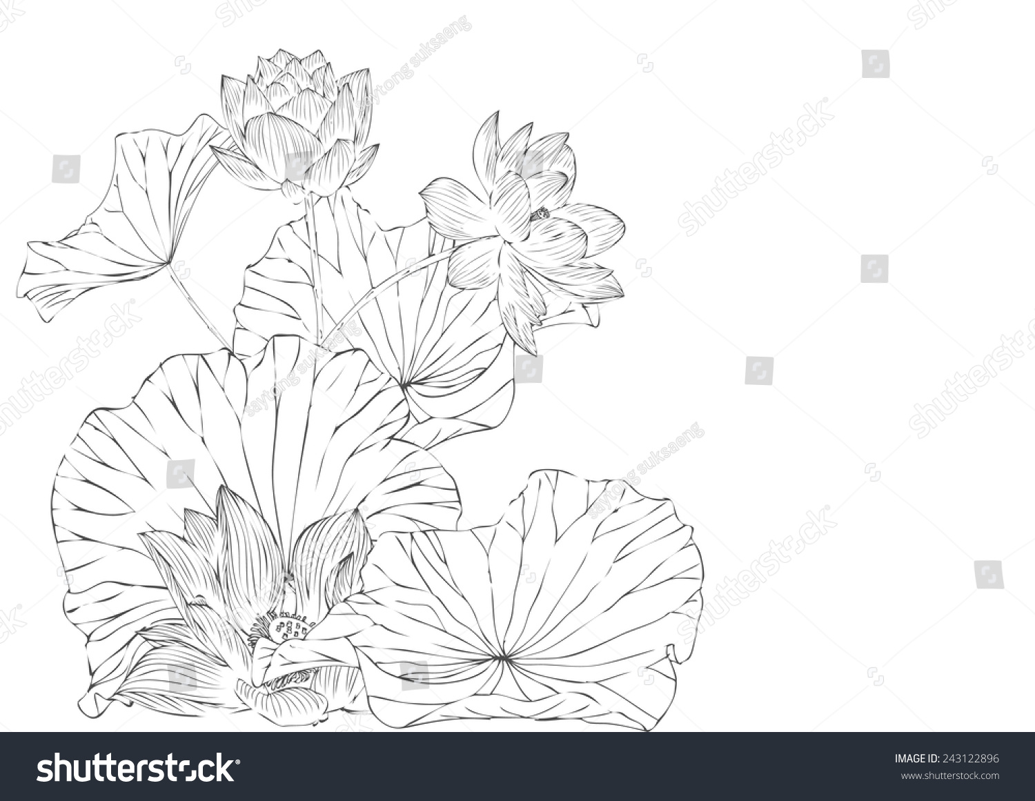 Lotus vector pattern for background and textabstract lotus symbols id 243122896 izmirmasajfo