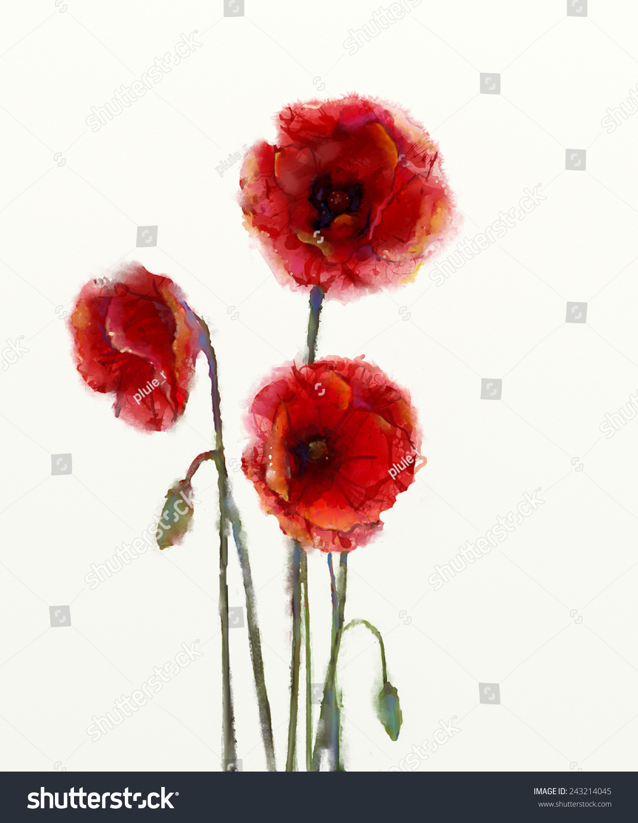 Red Poppy Flowers Watercolor Painting Isolated Stock Illustration