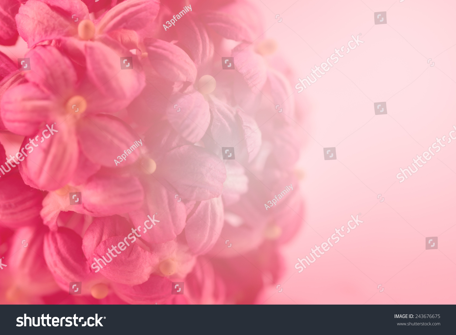 Sweet Color Flower Make Mulberry Paper Stock Photo Edit Now