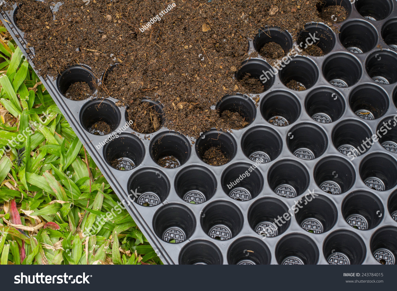 seed trays full of compost ready for planting vegetable seeds