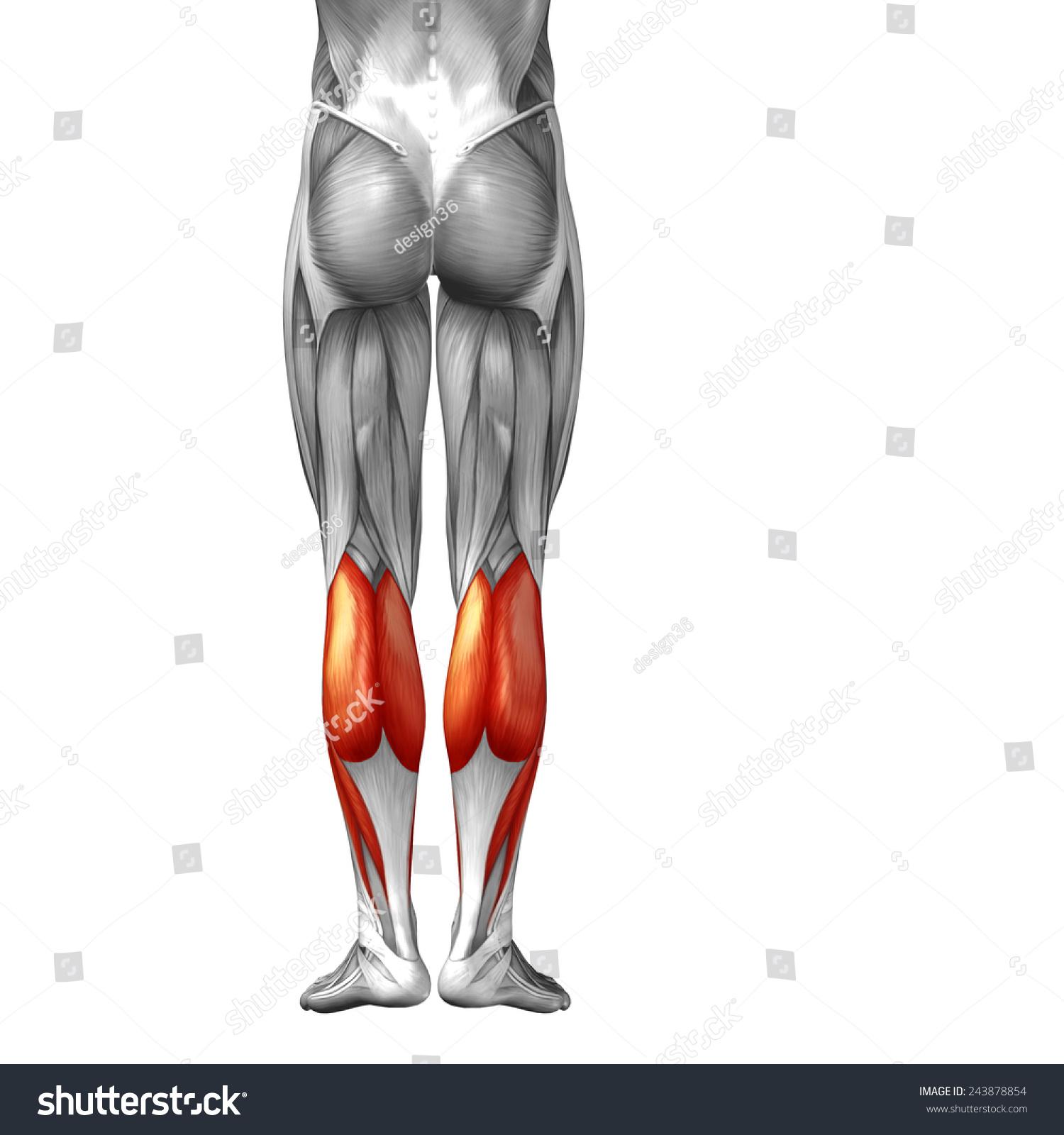 Concept Conceptual 3 D Back Lower Leg Stock Illustration 243878854 ...