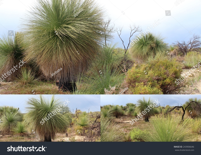 parks australia western yalgorup national park
