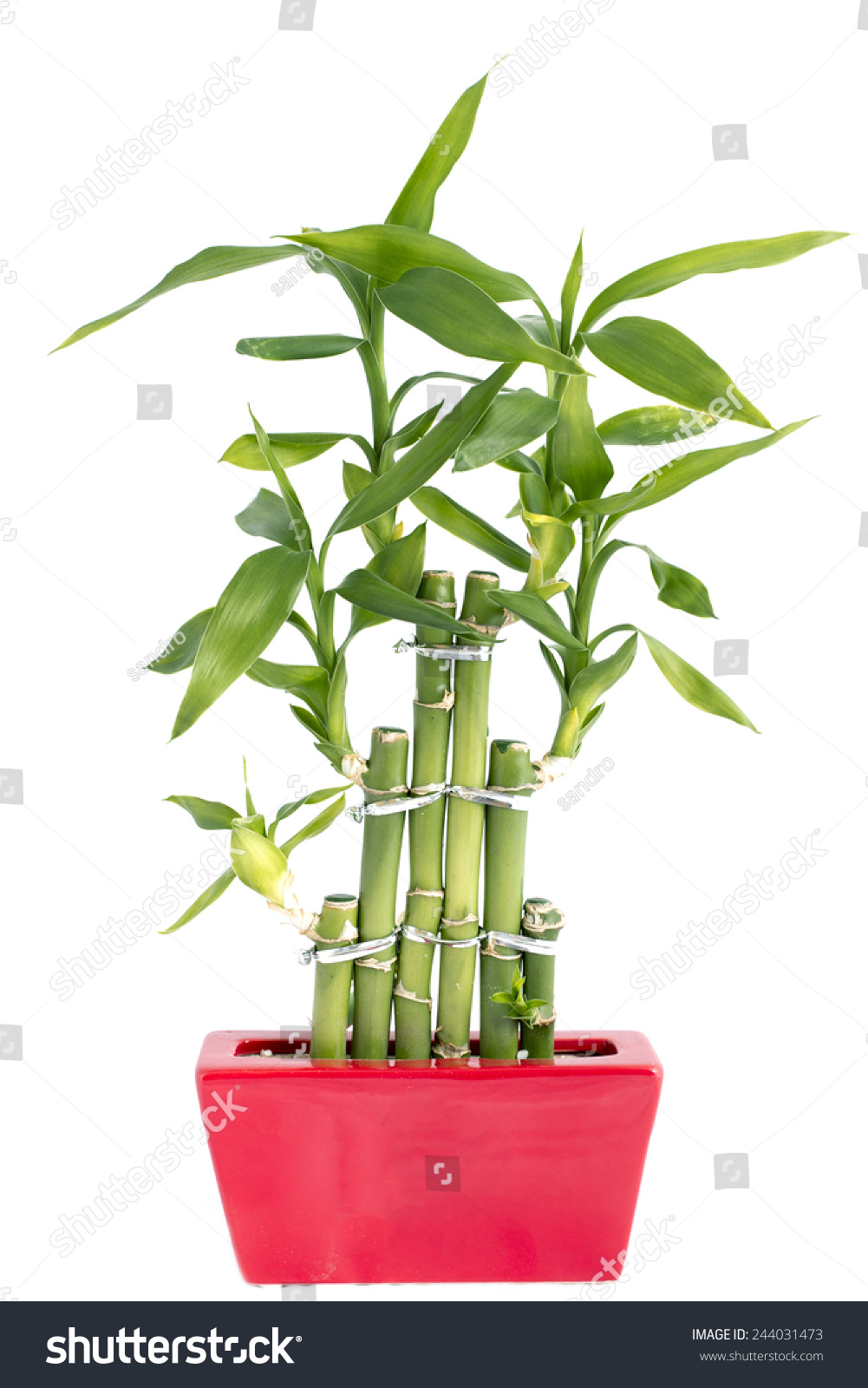 how to get bamboo out of pot