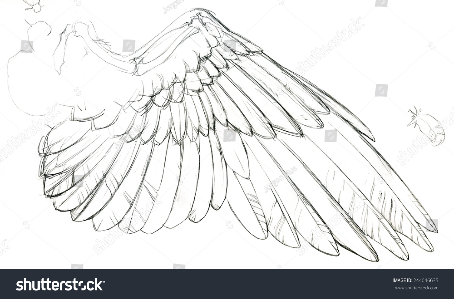 Detailed Sketch Birds Dove Wing Part Stock Illustration Royalty
