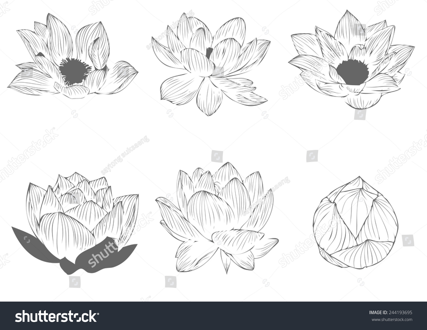 Set vector lotus flower painting graphic stock vector royalty free set vector lotus flower painting graphic stripes for background and text izmirmasajfo