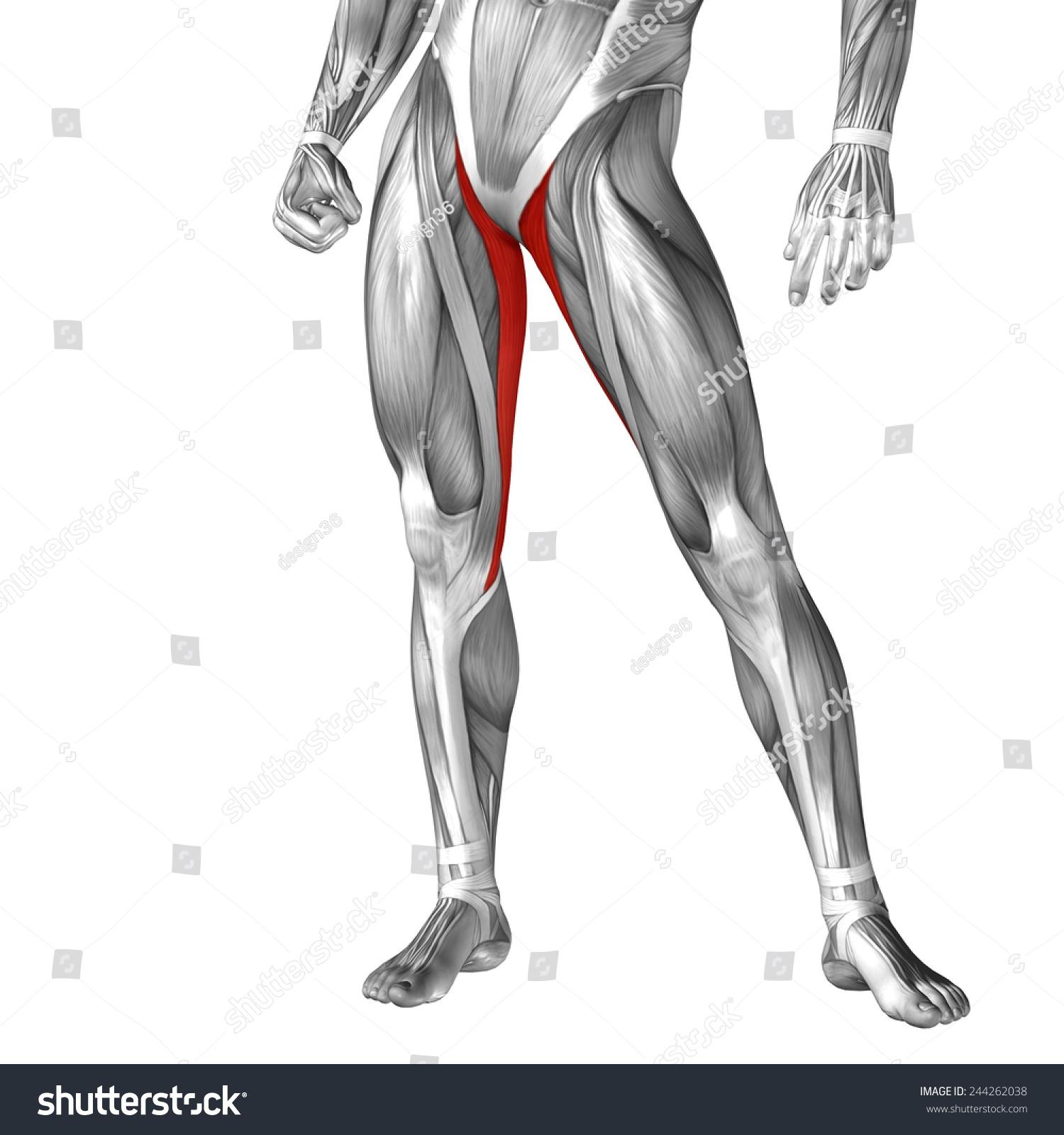Concept Conceptual 3 D Front Upper Leg Stock Illustration 244262038 ...