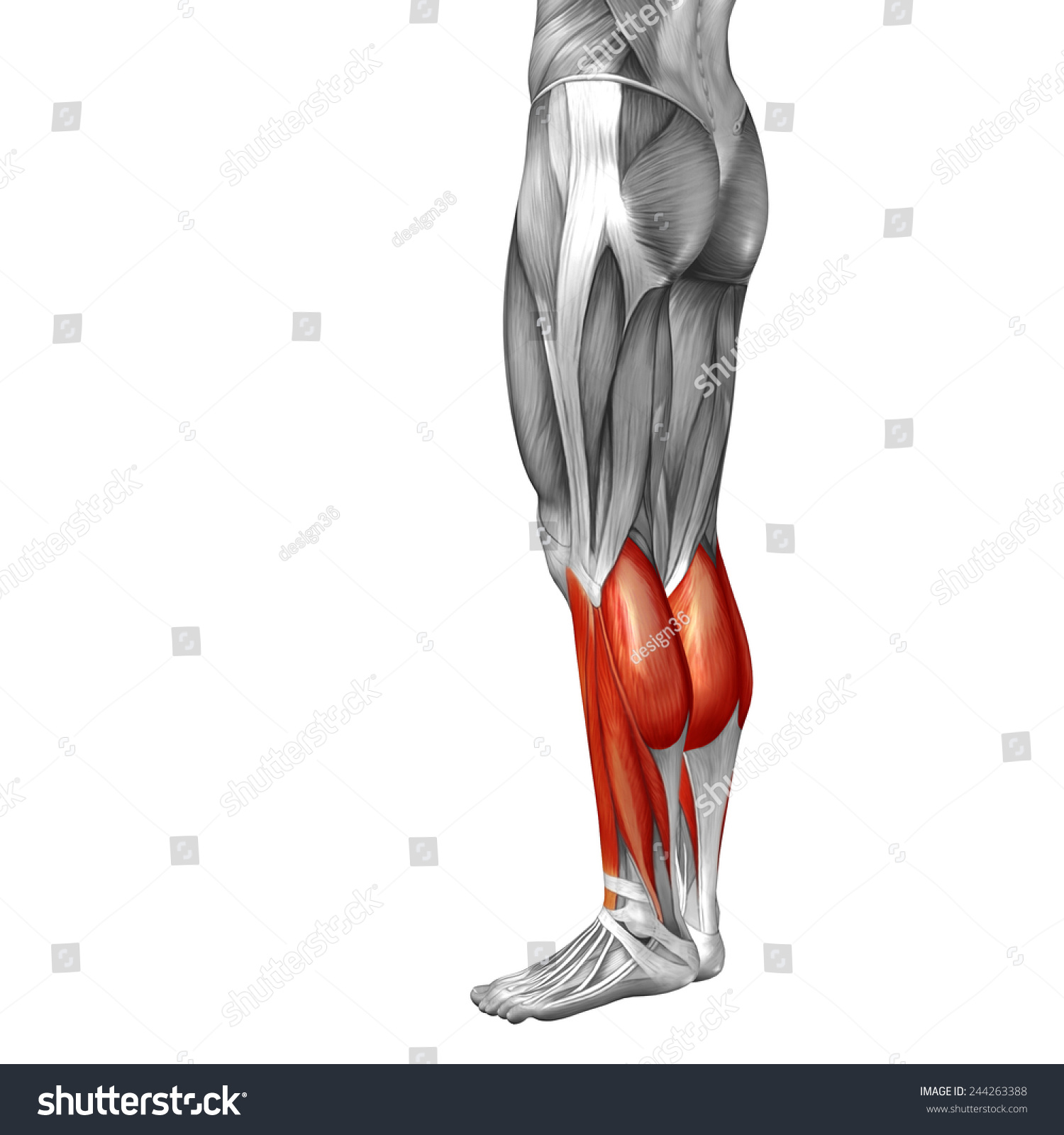 Concept Conceptual 3 D Back Lower Leg Stock Illustration 244263388