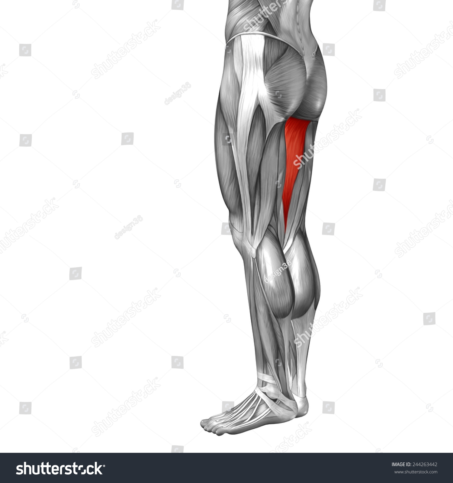 Concept Conceptual 3 D Back Upper Leg Stock Illustration 244263442 ...