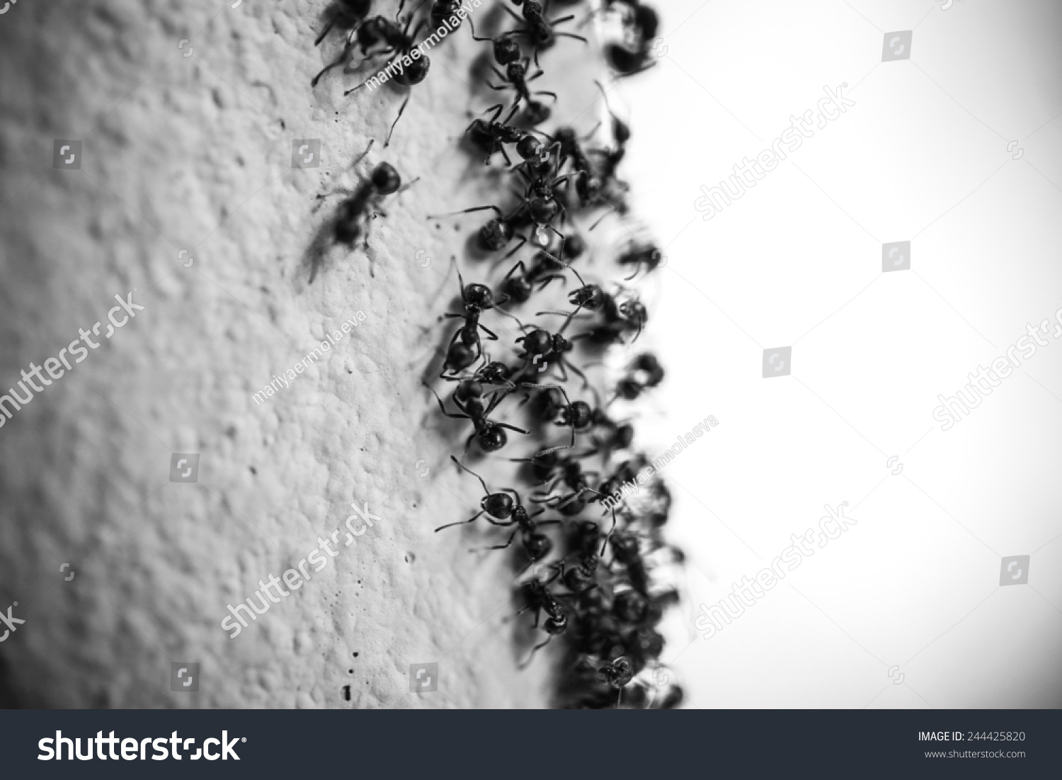how to kill carpenter ants in the wall
