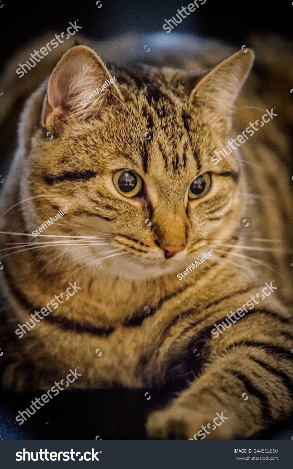 cat ima kitty cat