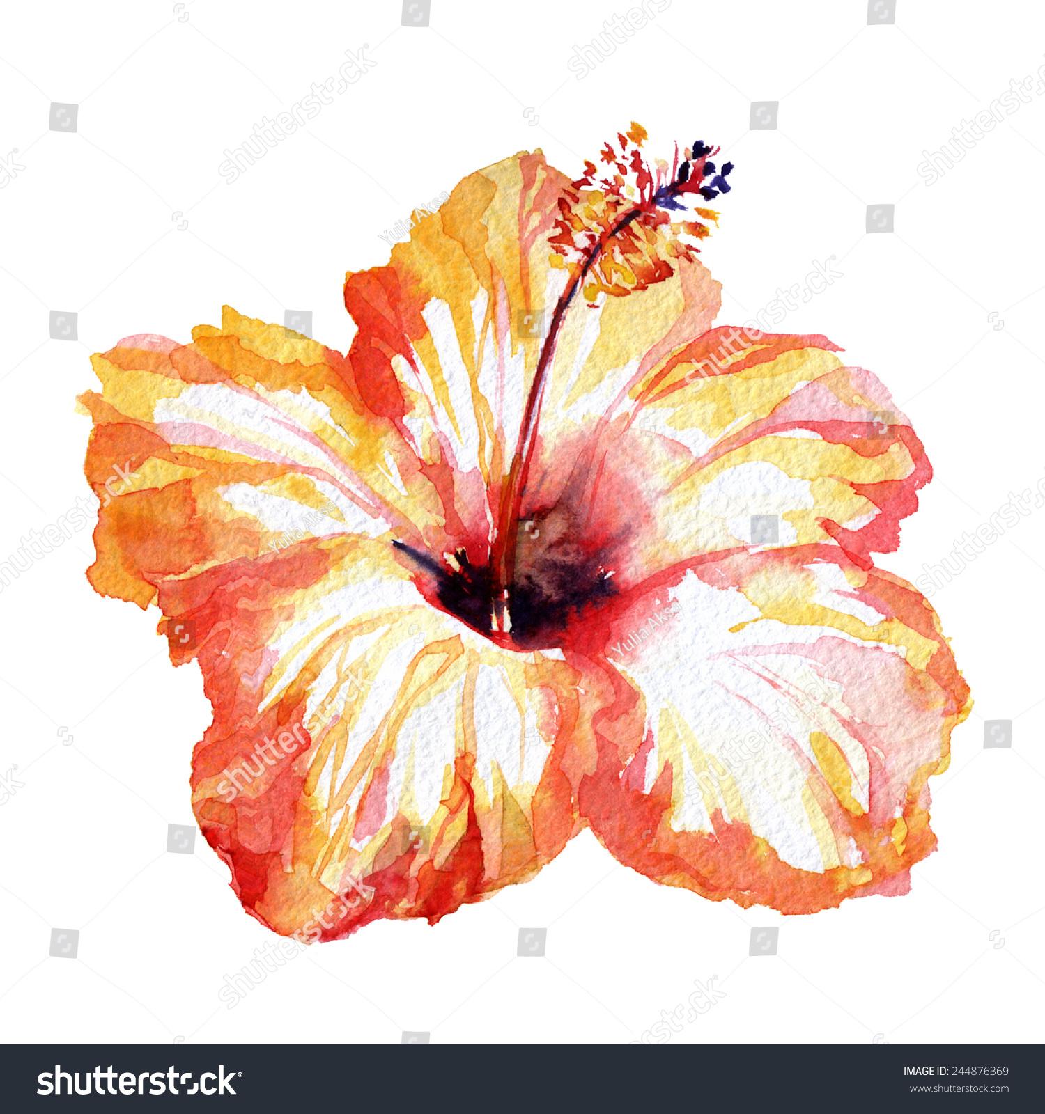 Gorgeous hibiscus flower orange red watercolor stock illustration gorgeous hibiscus flower orange red watercolor flower red painted flower watercolor hibiscus izmirmasajfo