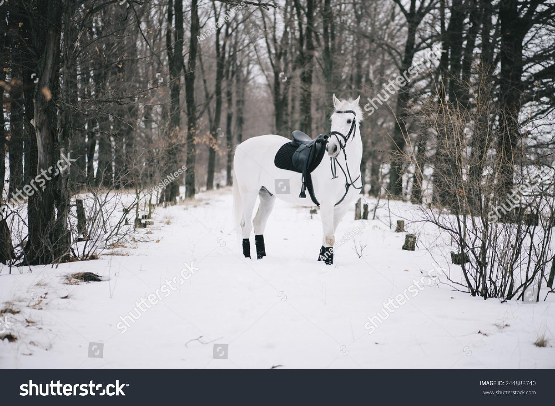 Macro Adorable Cute White Horse Winter Stock Photo Edit Now 244883740
