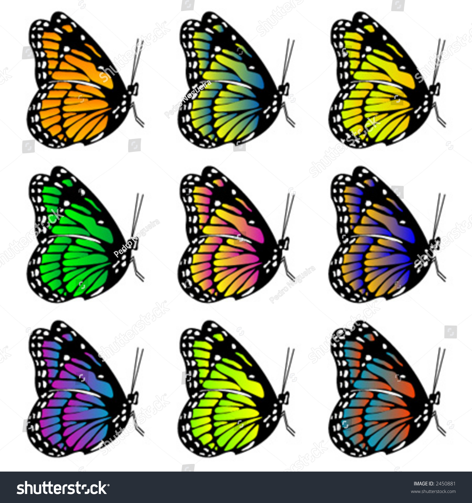 Butterflies With Different Colors Over White Background ...
