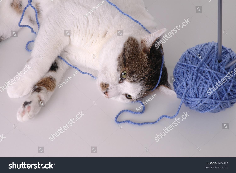 cat littler box