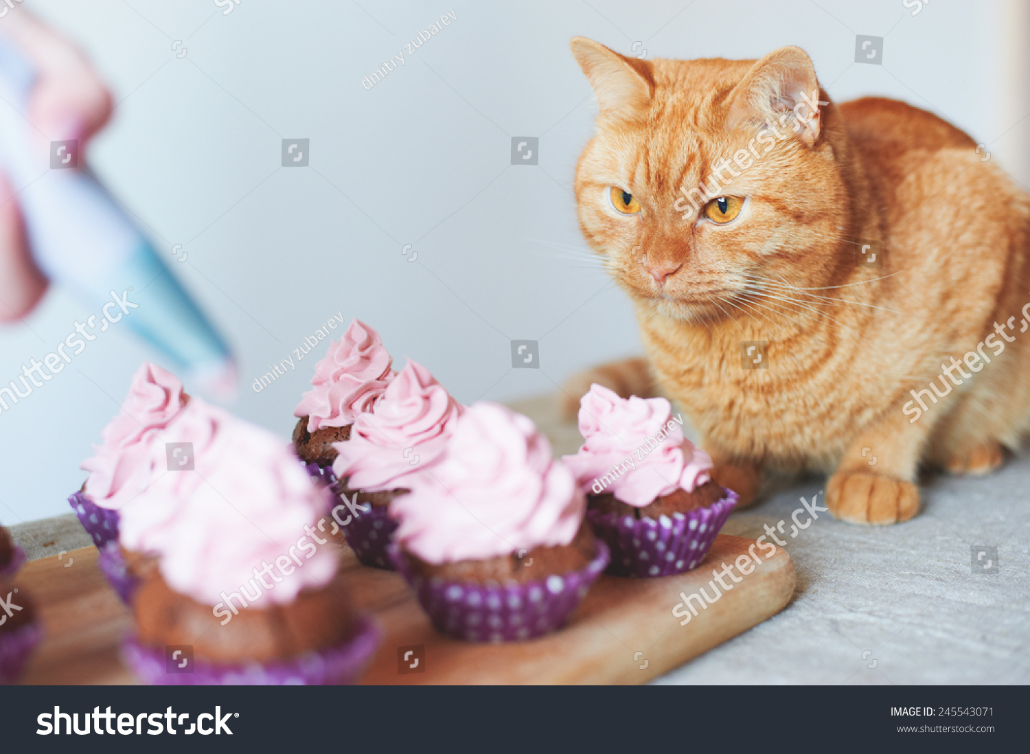 Red Cat Sitting Near Cupcakes On Stock Photo 245543071