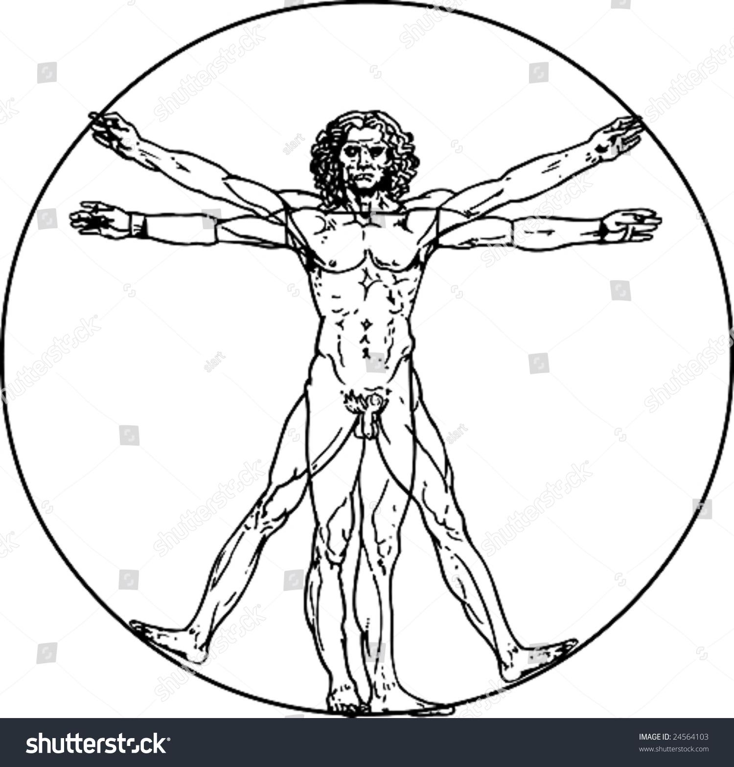 Leonardo Da Vincis Vitruvian Man Vector Stock Vector 24564103 ...