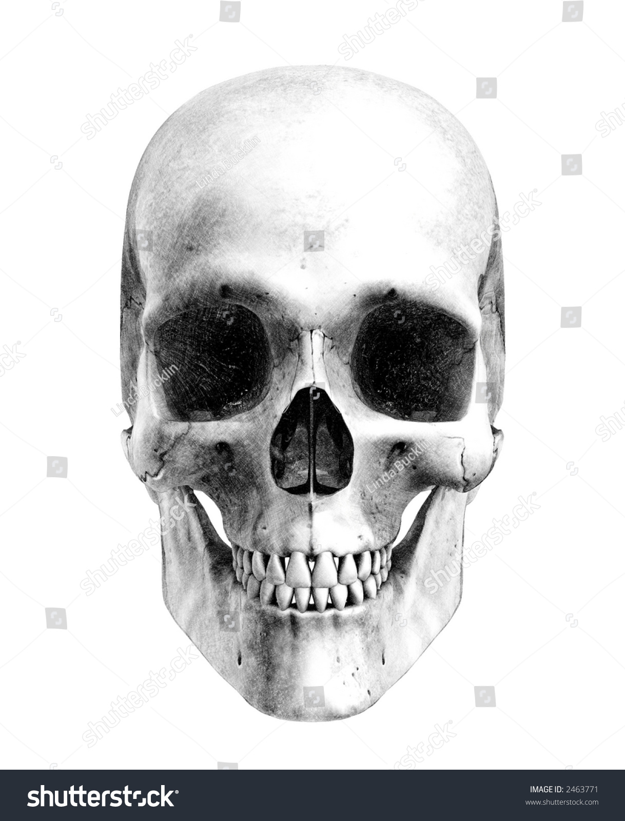 Human Skull Front View Pencil Drawing Stock Illustration Royalty