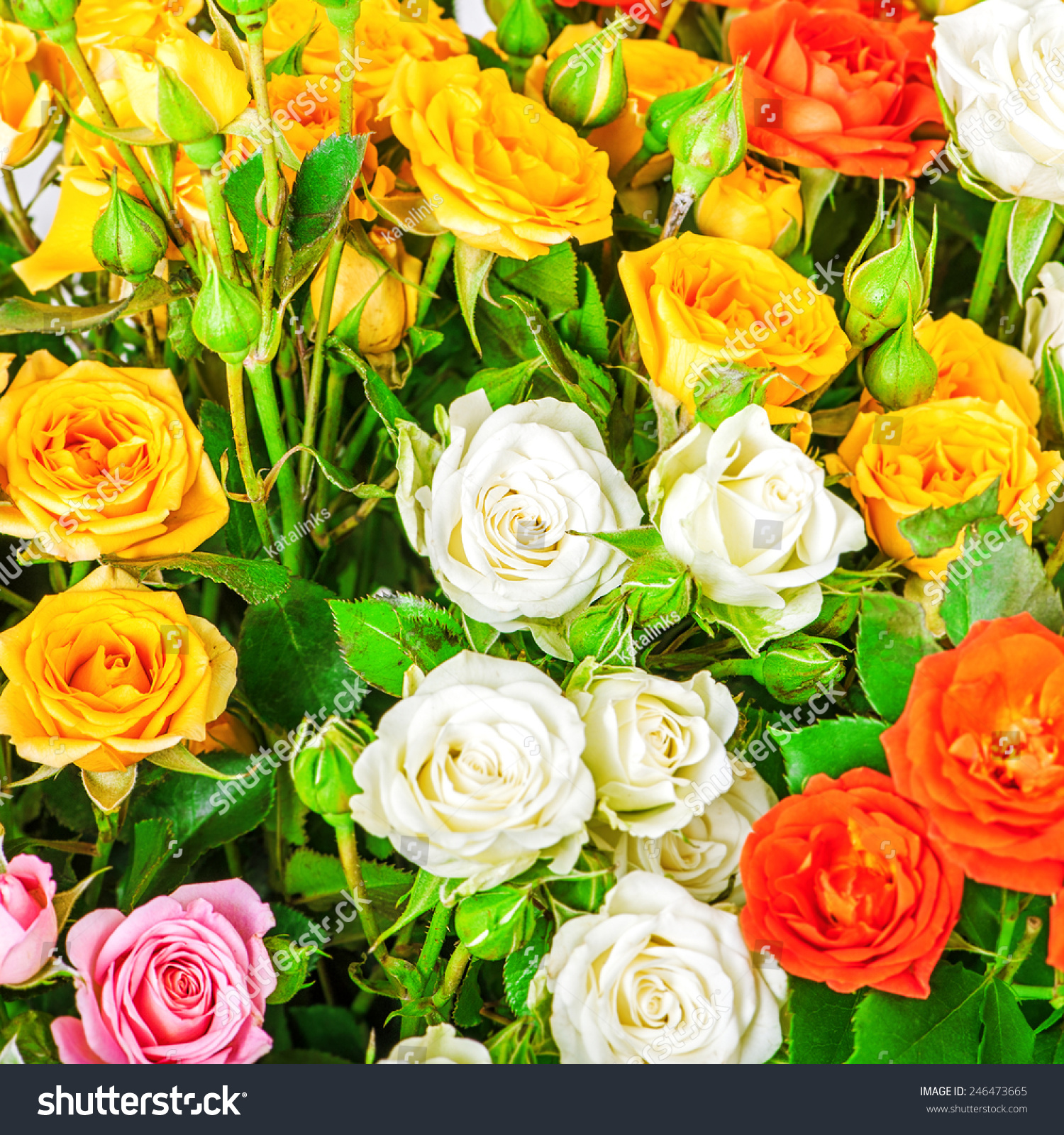 Big Bunch Beautiful Flowers Multicolored Roses Stock Photo Edit Now