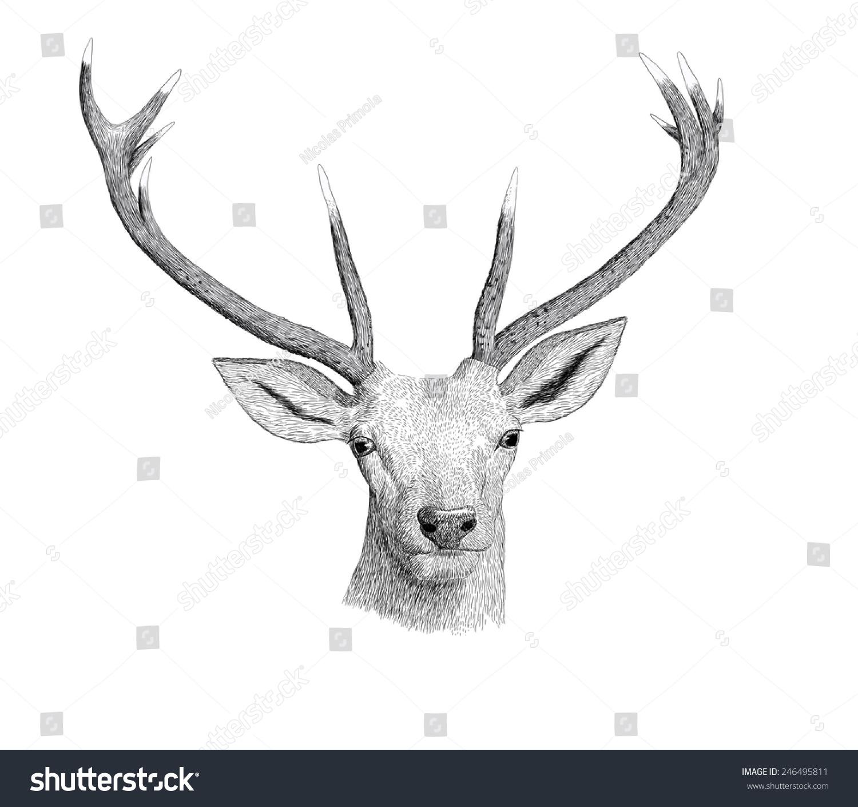 Digital Ink Illustration Of A Deer Head