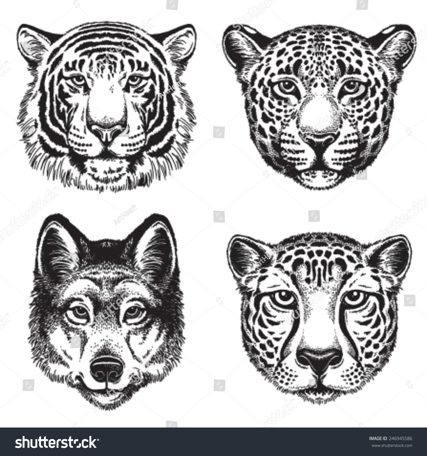 Line Drawing Of Animal Faces : Black white vector line drawings wild stock