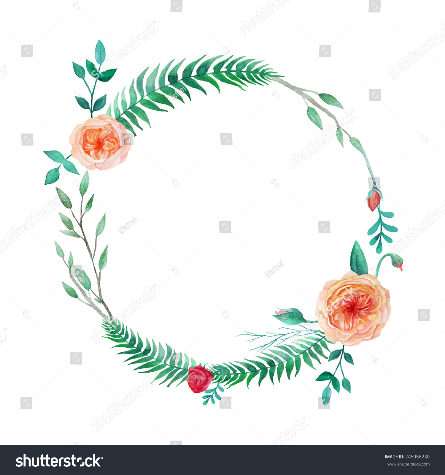Round frame with decorative branch vector illustration stock -  Vectors Illustrations Footage Music Watercolor Garden Roses Wreath Round Frame With English Roses Plants Fern And Branches