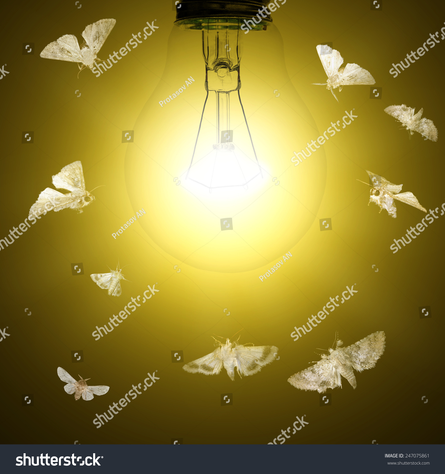 Light Bulb Moths Flying Around Stock Photo 247075861 - Shutterstock:Light bulb and moths flying around,Lighting
