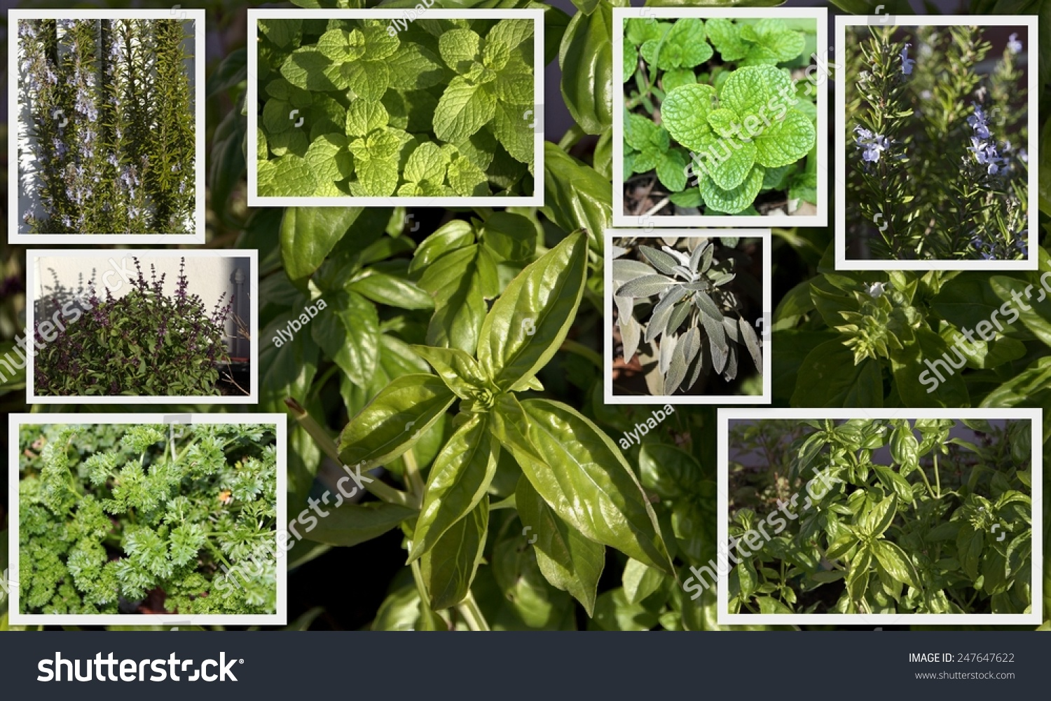 What are some commonly used herbs?