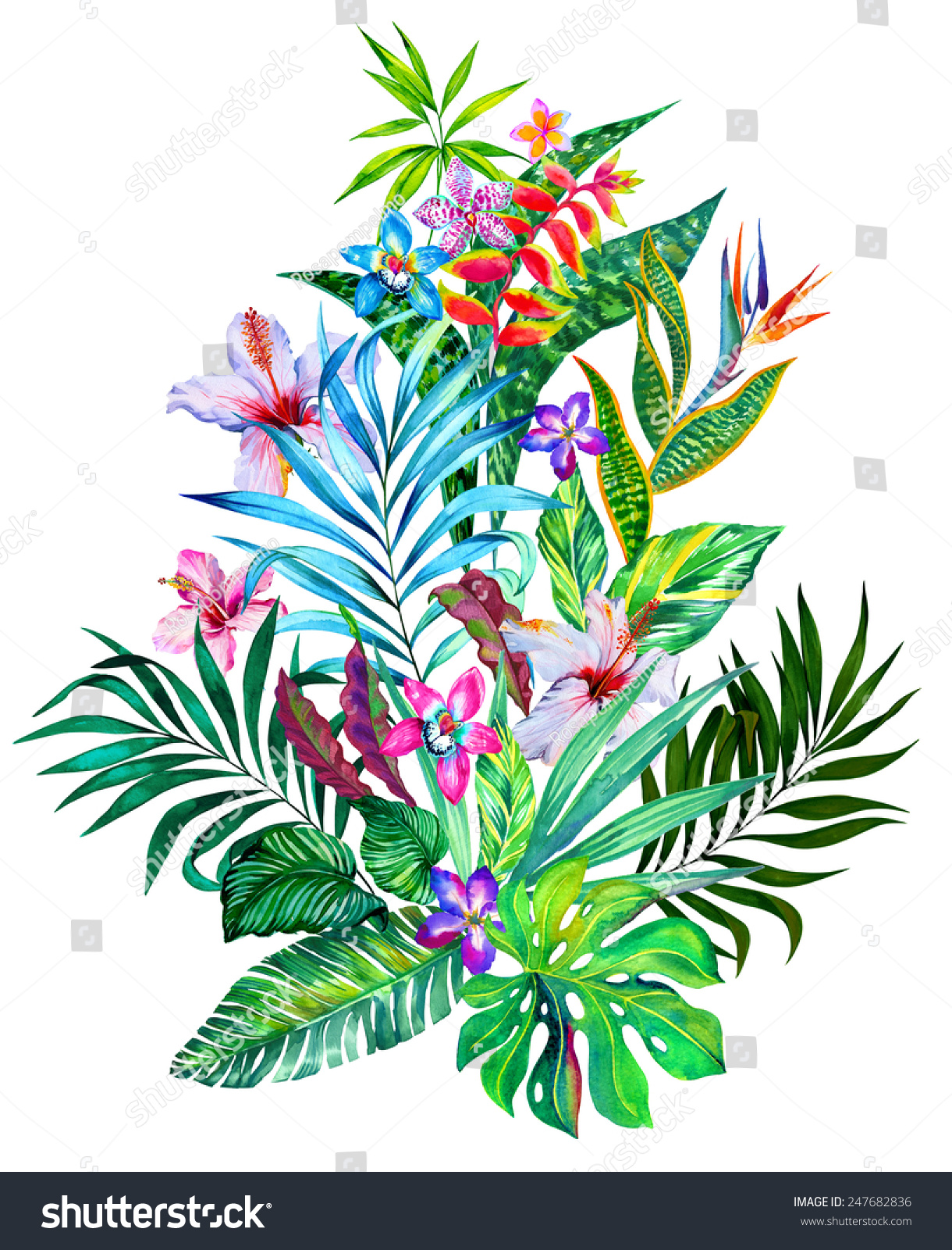 Exotic Flowers Large Tropical Bouquet Isolated Stock Illustration ...