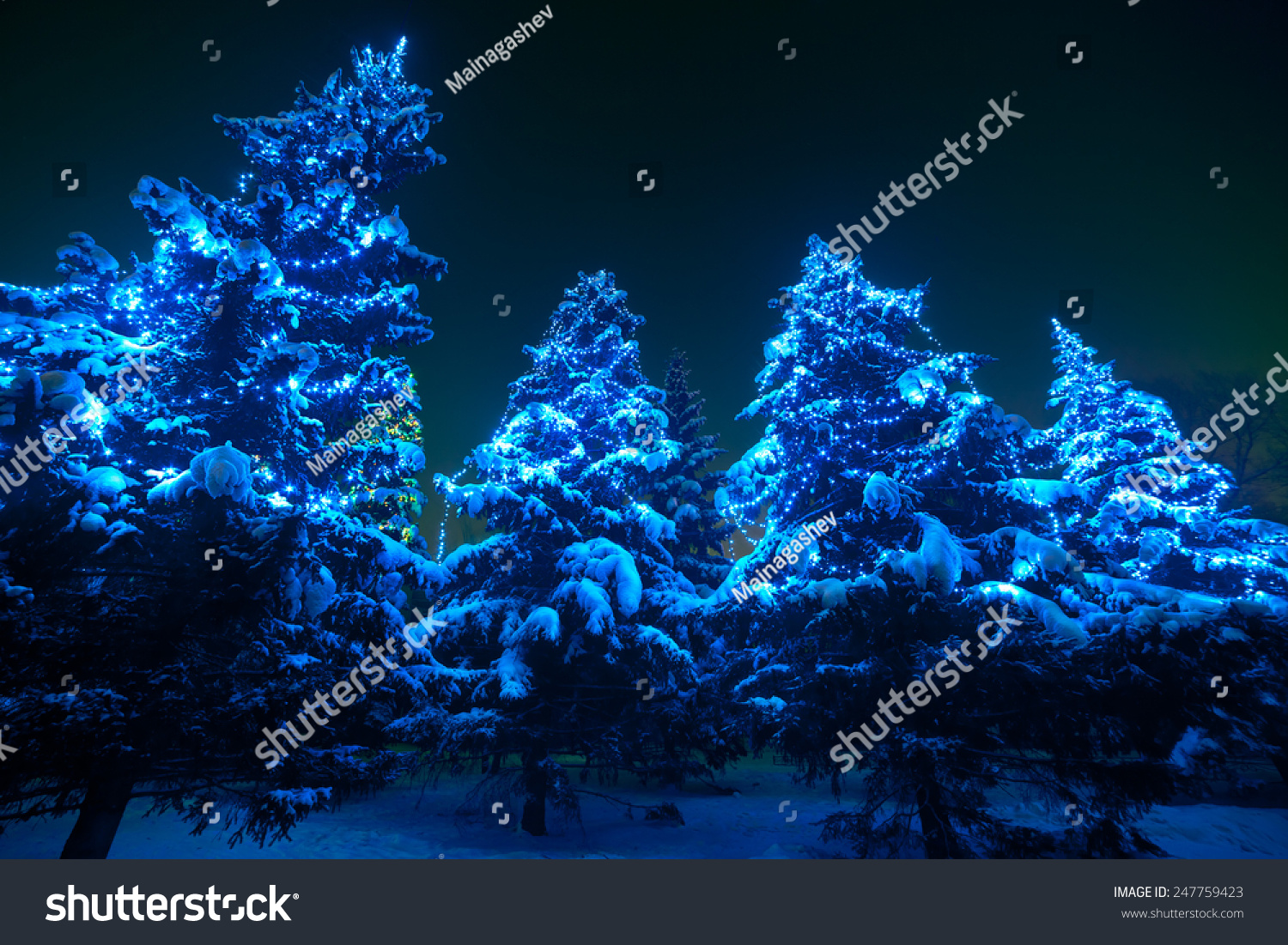 snow covered christmas tree lights in a winter forest by night huge fir trees with - Snow Covered Christmas Trees