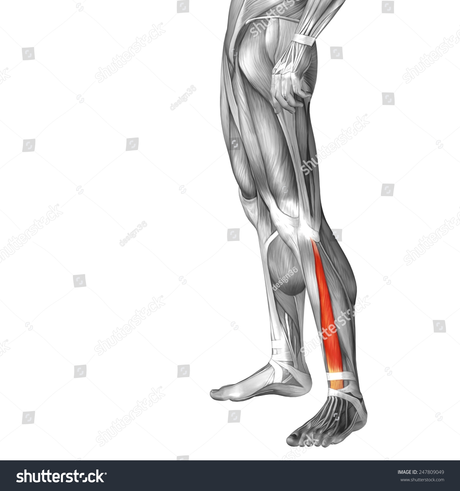 Royalty Free Stock Illustration Of Concept Conceptual 3 D Extensor