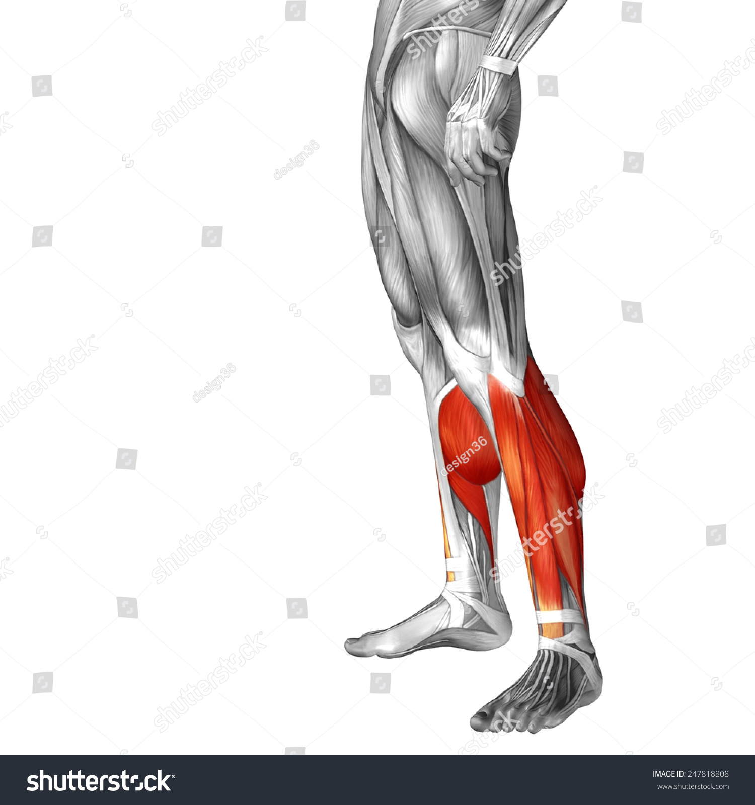 Concept Conceptual 3 D Back Lower Leg Stock Illustration 247818808