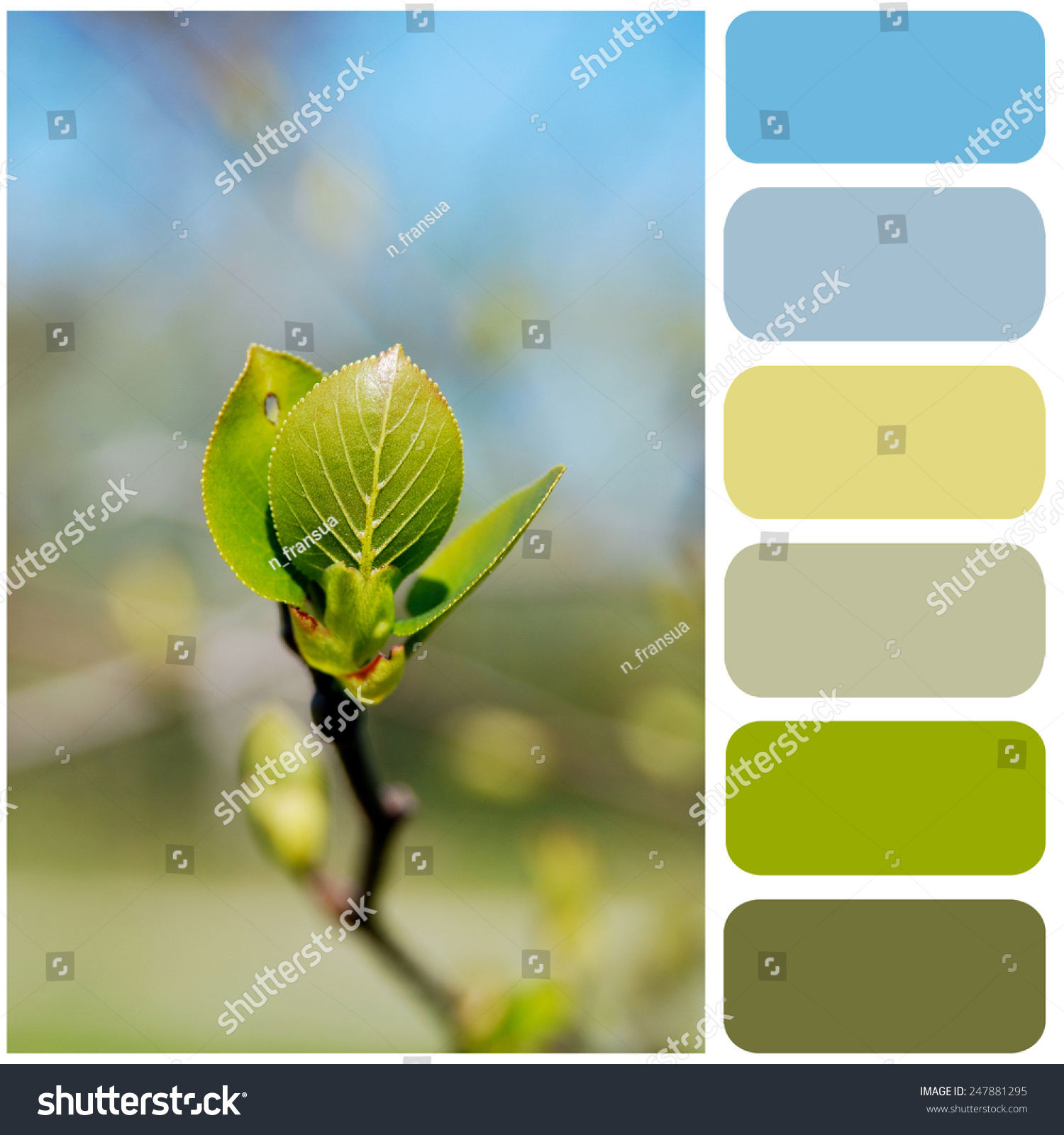 Young Spring Sprout Color Palette Your Stock Photo 247881295 ...